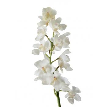 Cymbidium tak grootbloemig met 10-12 bloemen.
