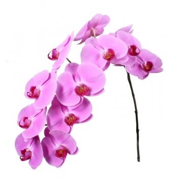 2 Phalaenopsis stelen met 12 bloemen per steel