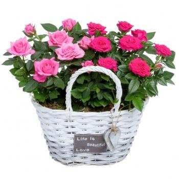 Potrozen roze en cerise in een rieten hengselmand