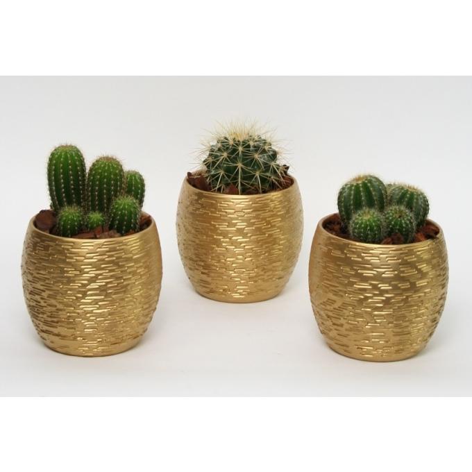 Cactus in een gouden keramieke Brick pot