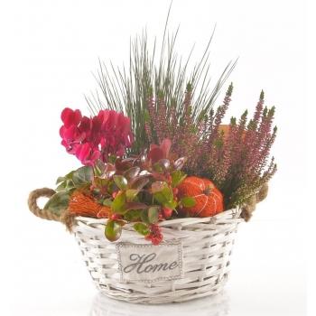 Najaarsplanten in een witte mand