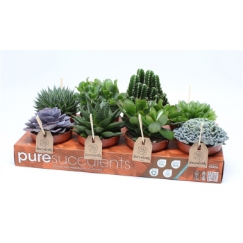 Vet planten mix in een tray met 8 planten