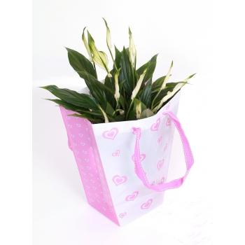 Spathiphyllum in een lief love tasje