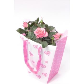 Potroos in hartjes tasje met roze doekje