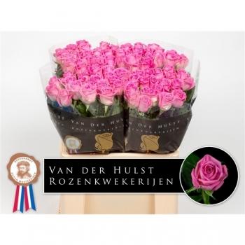 Roze Rozen boeket van lange middel grootbloemige Rozen