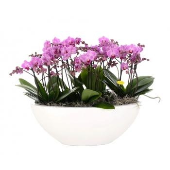 Phalaenopsis arrangement roze in schaal Glossy ovaal