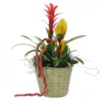 Bromelia arrangement in een rieten mand