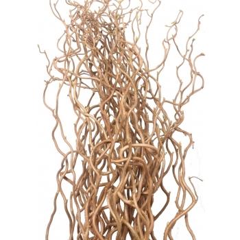 10 Corylus takken Avellana (kronkelwilg takken)