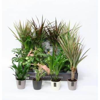 Kleine groene plantjes in magneetpotjes MCnetics grey