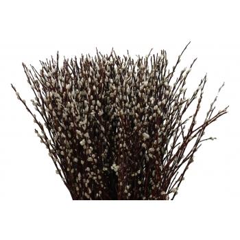 Katjestakken (Salix) lang per 20 takken