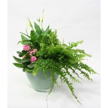 Plantenarrangement in hemlock kleurige glascoupe