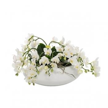 Phalaenopsis Artisto wit in een grote witte schaal