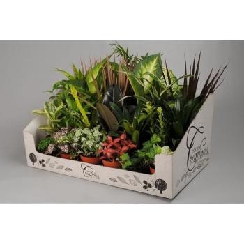 Kleine groene plantjes in een display doos