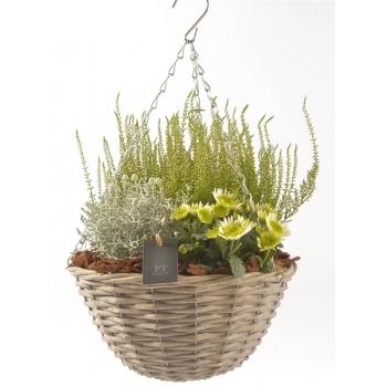 Najaarsplantjes in een hanging basket