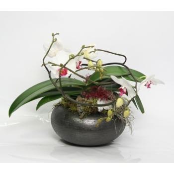 Phalaenopsis Artisto wit arrangement in een ronde schaal