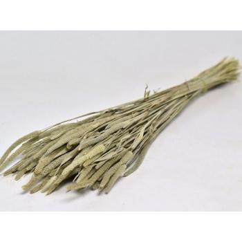 Gedroogde Phleum Pratensis 150 gram