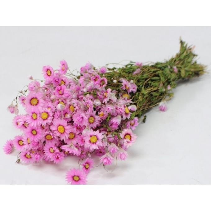 Gedroogde Rodanthe roze