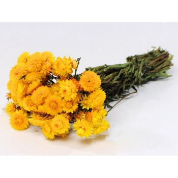 Gedroogde Helichrysum geel