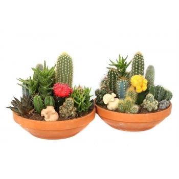 Beplante Cactus schaal
