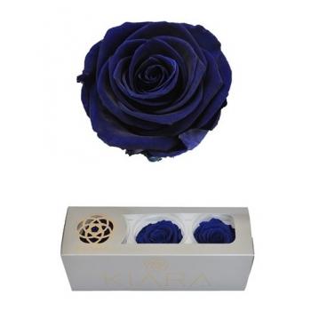 Geconserveerde Ocean Blue Rozen in een cadeaubox