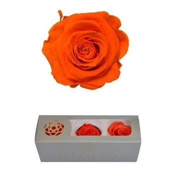 Geconserveerde Orange Flame Rozen in een cadeaubox