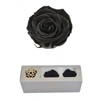 Geconserveerde Black Beauty Rozen in een cadeaubox