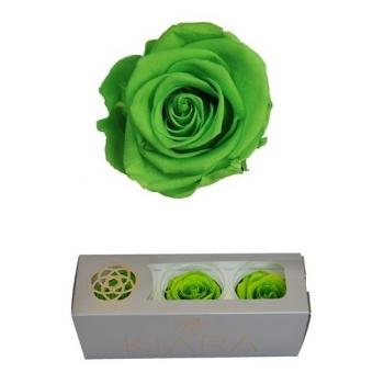 Geconserveerde Green Glow Rozen in een cadeaubox
