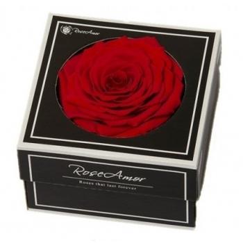 Geconserveerde rode Roos in een cadeaubox
