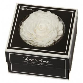 Geconserveerde witte Roos in een cadeaubox