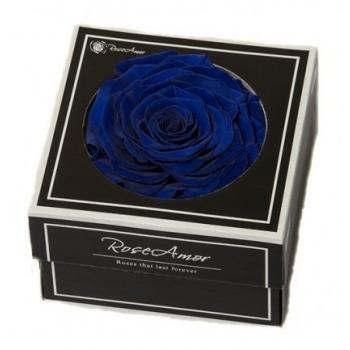 Geconserveerde blauwe Roos in een cadeaubox