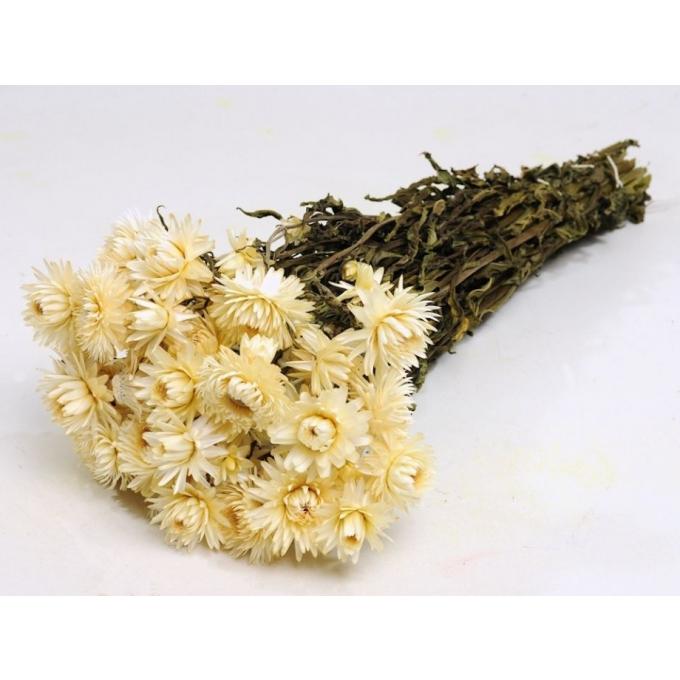 Gedroogde Helichrysum wit