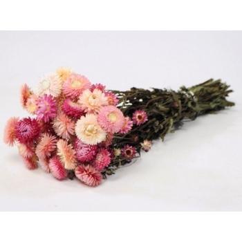 Gedroogde Helichrysum licht roze