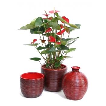 Anthurium in keramiek Cabo rood