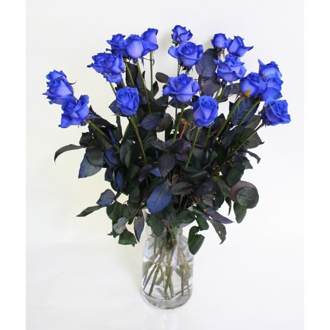 Blauwe Rozen middellang van middel grootbloemige Rozen