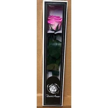 Geconserveerde roze Roos met steel in een cadeaubox