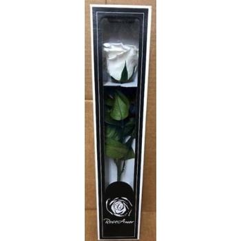 Geconserveerde witte Roos met steel in een cadeaubox