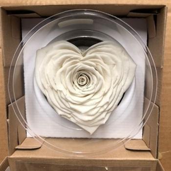 Geconserveerd wit Rozen hart in een cadeaubox