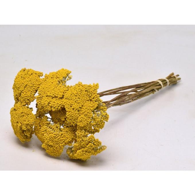 Gedroogde Achillea parker geel
