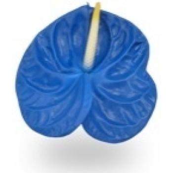 12 blauwe Anthurium