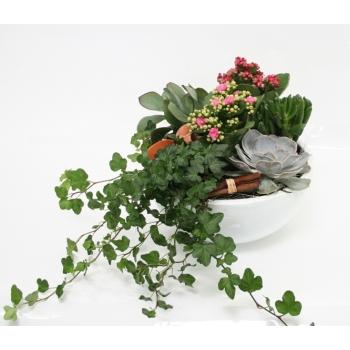 Opgemaakte plantenschaal in een witte keramieke schaal