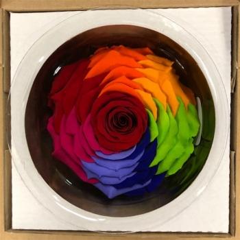 Geconserveerde regenboog Roos in een cadeaubox