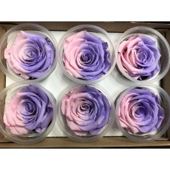 Geconserveerde lavendel roze Rozen in een cadeaubox