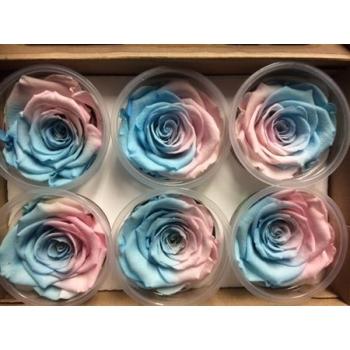 Geconserveerde licht blauw roze Rozen in een cadeaubox