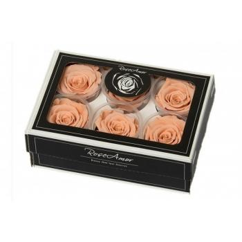 Geconserveerde peach Rozen in een cadeaubox