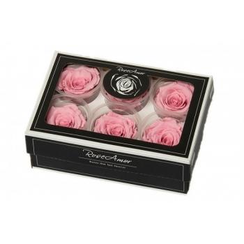 Geconserveerde licht roze Rozen in een cadeaubox