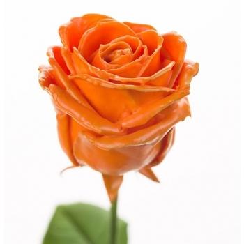 Boeket van grootbloemige oranje wax Rozen