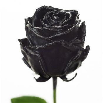 Boeket van grootbloemige zwarte wax Rozen