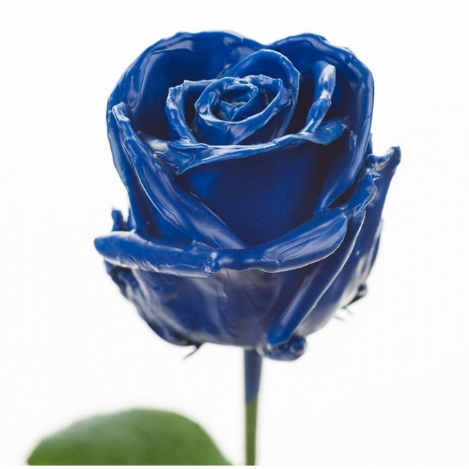 Boeket van grootbloemige donker blauwe wax Rozen