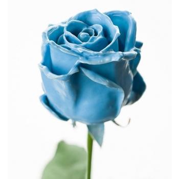 Boeket van grootbloemige licht blauwe wax Rozen
