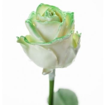 Boeket van grootbloemige wax Rozen wit met groene blos